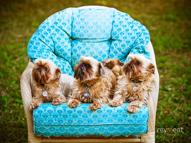 Dogs on chair 01.jpg